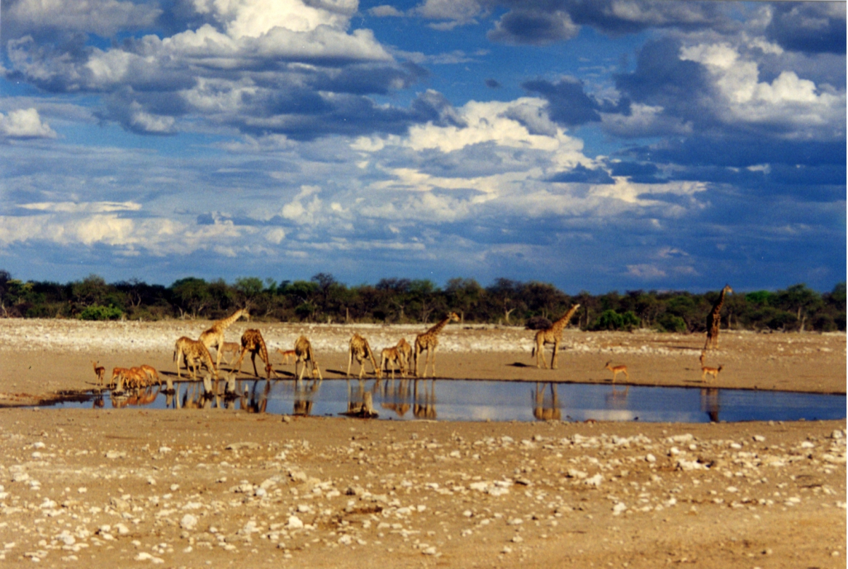 Etosha National Park and Namibia Desert